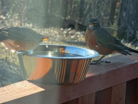robin-bowls